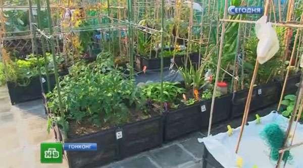 500 ящиков живого огорода
