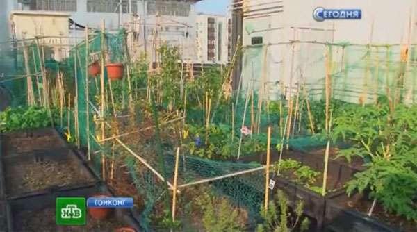 Огород на крыше - это не только фрукты и овощи, это зеленый отдых посреди шумного города